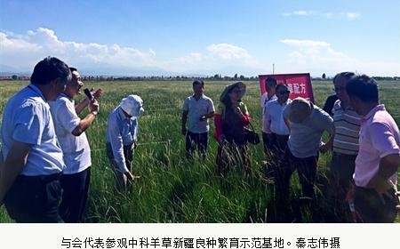 全国草产业发展现状、趋势,新疆适合种哪类牧草?
