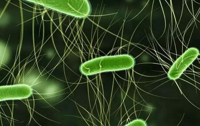肠道中的致病性大肠杆菌如何清除?