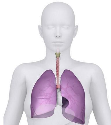 中医如何养肺?中医学中的七大养肺名方