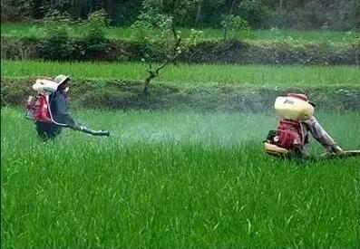醋能增产和除草是真的还是假的?