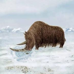 西藏披毛犀到底起源于哪里?青藏高原