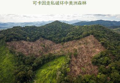 有多少森林因为毒品走私而被清除
