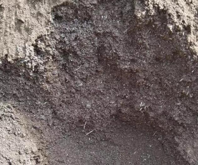 枯草芽孢杆菌有什么作用?