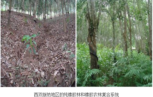 定量评价橡胶农林复合系统对西双版纳地区土壤物理和水文条件的改良作用