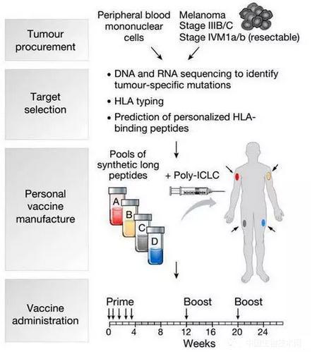 癌症疫苗制备过程、临床试验结果