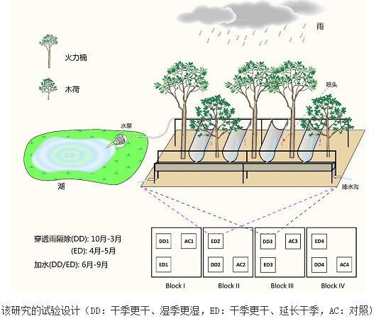 降雨季节变化对树木生理的影响