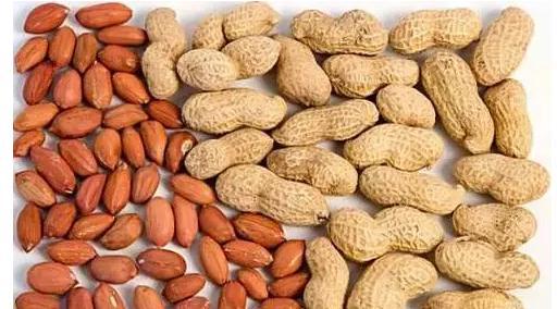 食疗养生:长寿食物有哪些?长寿第一汤、肉、杂粮、豆、坚果、食物药、补、粥、饮、水果