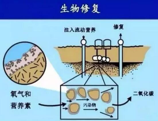 微生物肥料修复土壤的技术创新