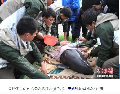在长江口崇明西部东风西沙水域发现江豚新种群