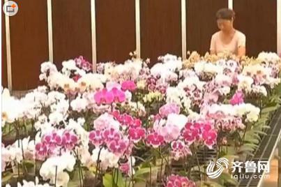 一株价值2000万的新一代雌性植株蝴蝶兰被偷