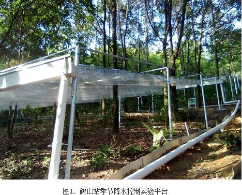 季节降水变化对亚热带森林土壤氮转化研究进展