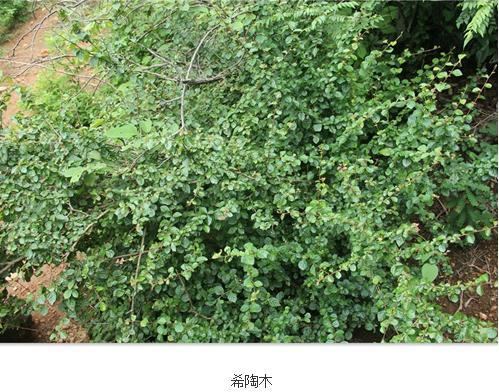 希陶木属:大戟科植物属于风轮桐族下一个全新的属