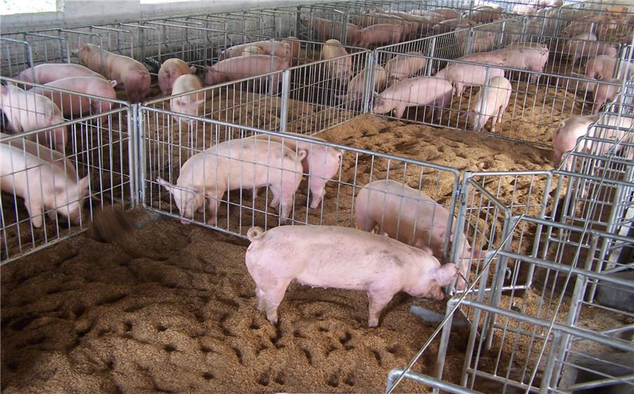 养猪需要哪些Sun Game太阳城亚洲