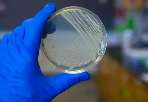 如何控制微生物实验室的质量?
