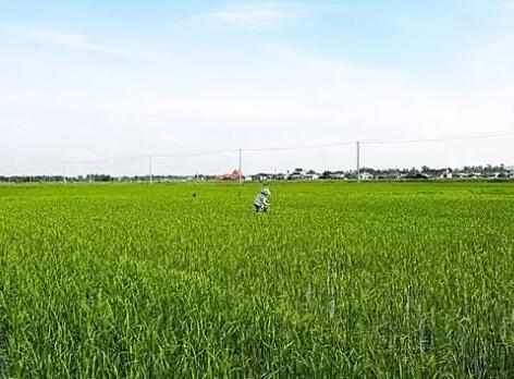 太阳城亚洲投入2.7亿元资金推广有机肥