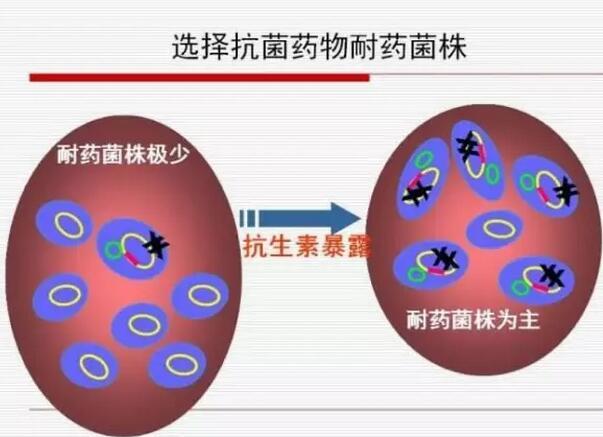 世卫组织:12种耐药菌急需研发新型抗生素