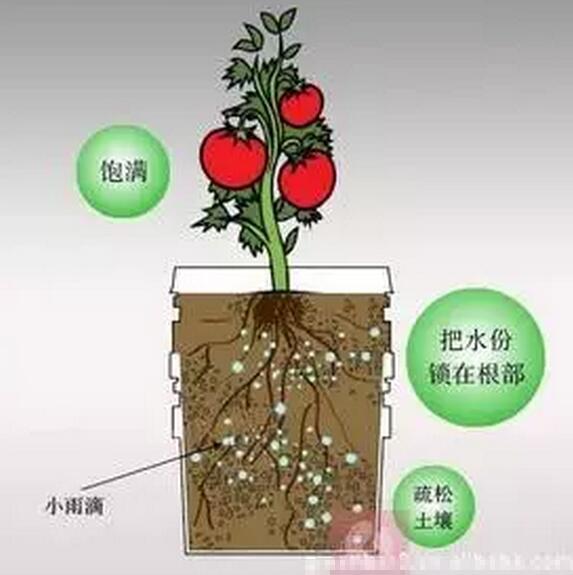 有机肥保水保肥的原理
