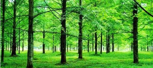美国退出《巴黎协定》对中国林业发展有何影响?