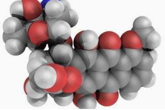 最新研究发现抗癌剂阿霉素可导致心肌萎缩的原因