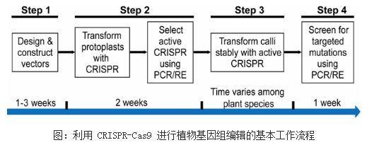 植物基因组编辑工具方法的应用