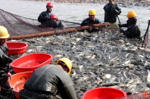 为什么要伏季休渔?休渔制度从那年开始?