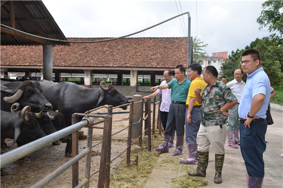 """育种技术:""""奶水牛遗传改良关键技术的合作研究与应用""""项目"""