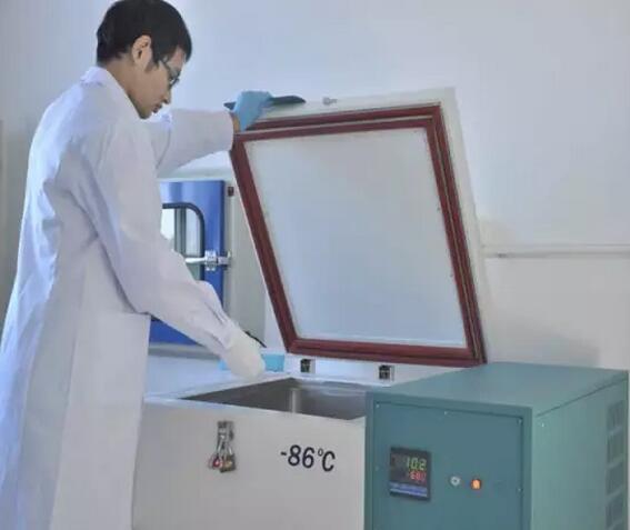 超低温保存引起细胞凋亡研究意义