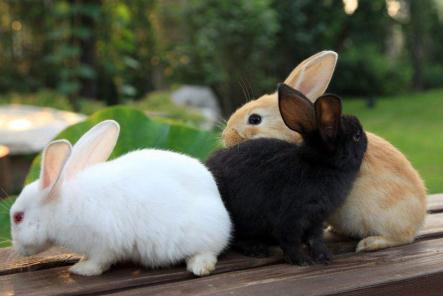 养兔子赚钱吗?养兔子有哪些风险?养兔子利润怎么样?