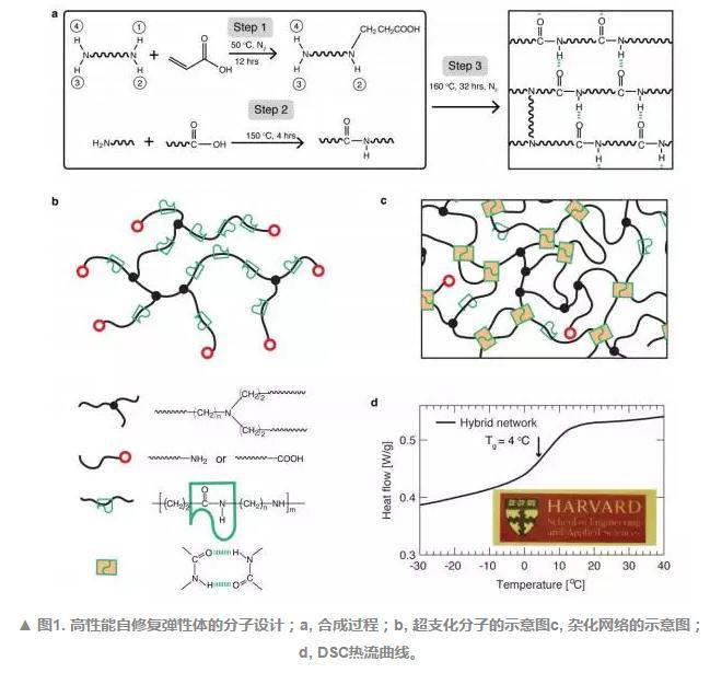 """吴锦荣联合蔡立恒研发出一种具有共价键和可逆键的混合橡胶(""""自愈""""橡胶)"""