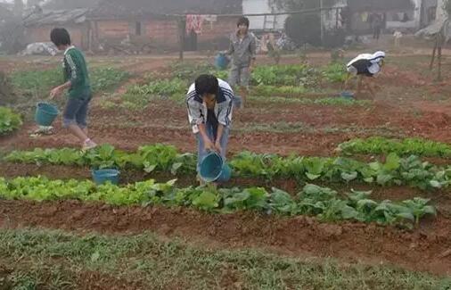 蔬菜施肥过剩导致的作物病害