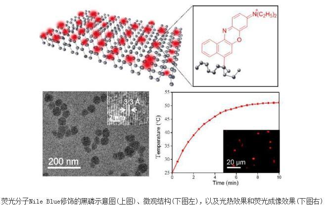 荧光分子修饰的高稳定性黑磷纳米片制备成功