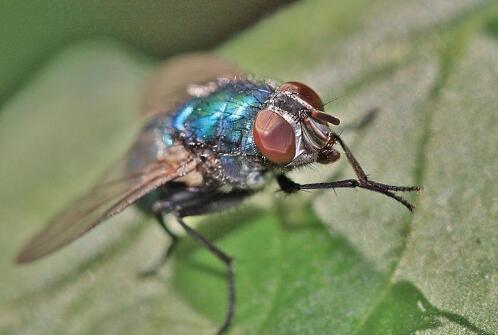 美科学家模仿昆虫复眼构造设计出钙钛矿太阳能电池