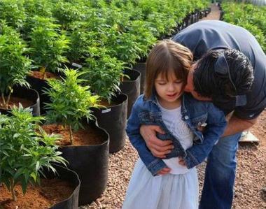 父亲为癫痫病女儿种大麻:提取大麻中的化学成分CPD制成Charlotte's Web