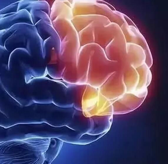最新发现:胚胎干细胞具有全能性