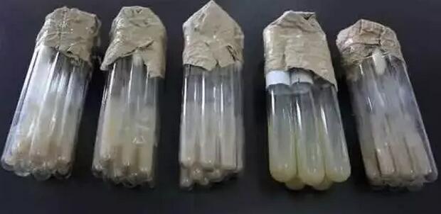 微生物菌种活化小妙招