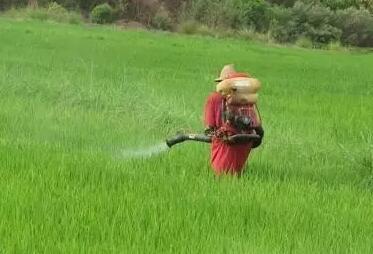 注意:一定要看打农药的十大禁忌