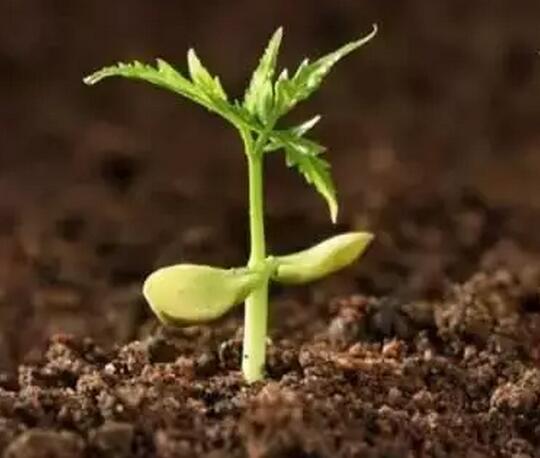 如何来养护土壤微生物
