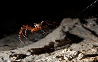 石墨烯材料可以增强蜘蛛丝的韧性