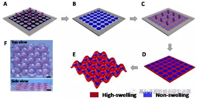 周期性图案化水凝胶会发生协同变形,自发形成交替的凹凸结构