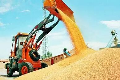 国家将继续坚持小麦最低收购价政策