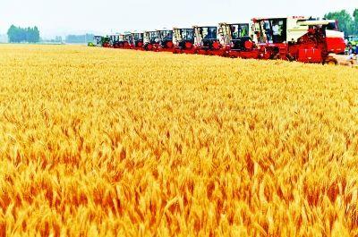 一粒小麦变身500种产品——透视粮食产业转型升级新路径