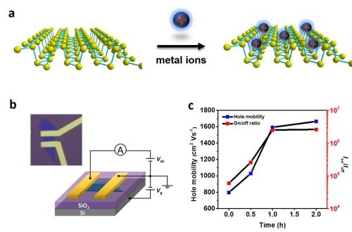 金属离子修饰黑磷的方法提高黑磷片层的稳定性