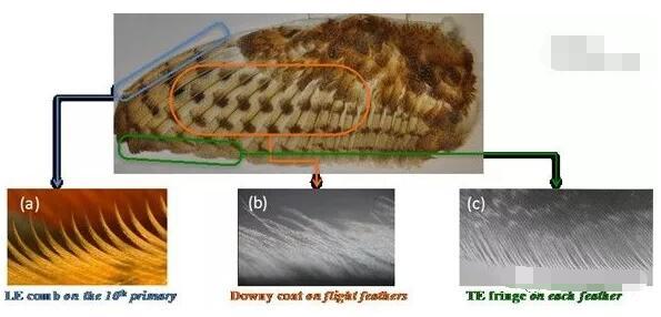 使用3D打印开发受猫头鹰翅膀启发的超静音涡轮叶片