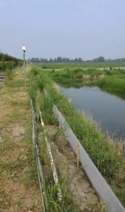 水稻种植和水产养殖模式的技术试验