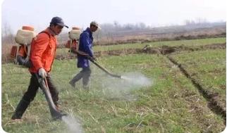 苗木种植技术要点分析