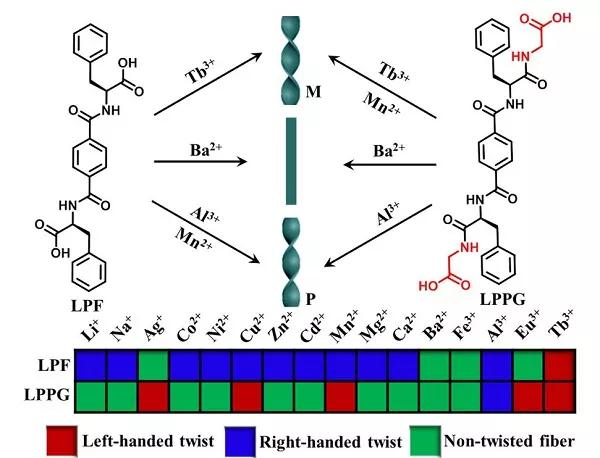 基于苯丙氨酸衍生物的凝胶因子可通过分子间氢键作用自组装