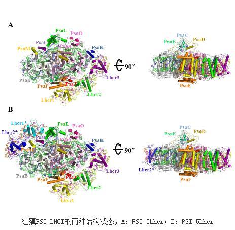 首次解析真核藻类的PSI高分辨率三维结构研究