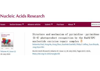 贝勒大学生化系教授揭秘紫外线DNA损伤及细胞分子修复机制动态过程