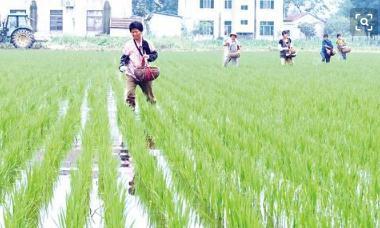 农地确权下种粮大户施用有机肥的行为影响因素研究