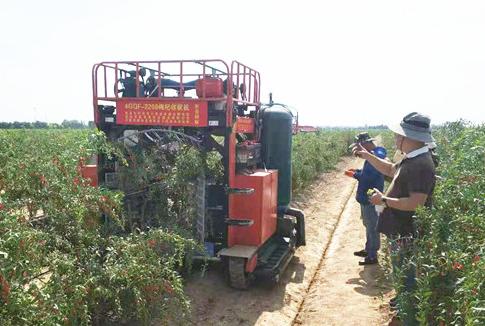 农机化所创制枸杞气振联合采收技术 一台机器顶30多人